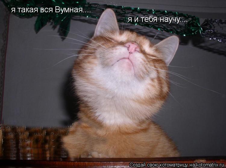 Котоматрица: я такая вся Вумная.... я и тебя научу....
