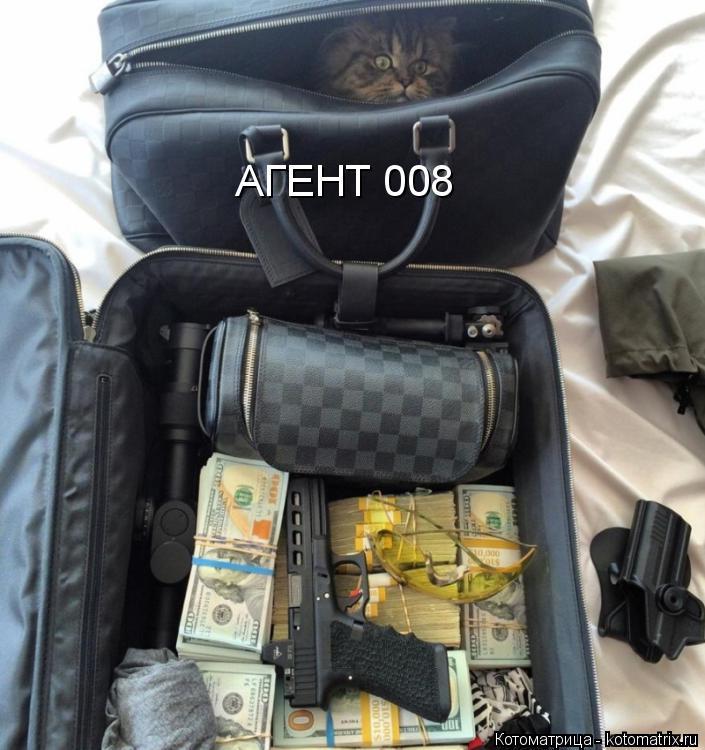 Котоматрица: АГЕНТ 008