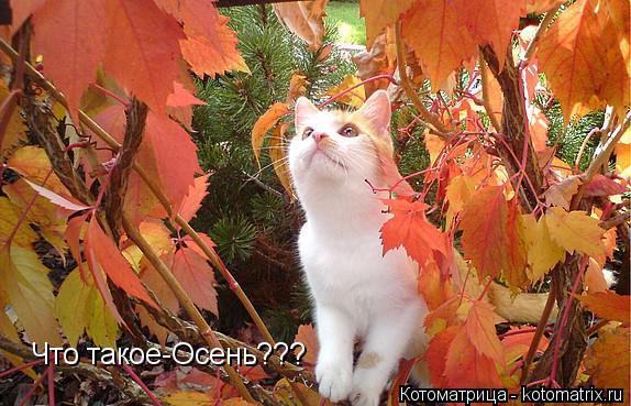 Котоматрица: Что такое-Осень???