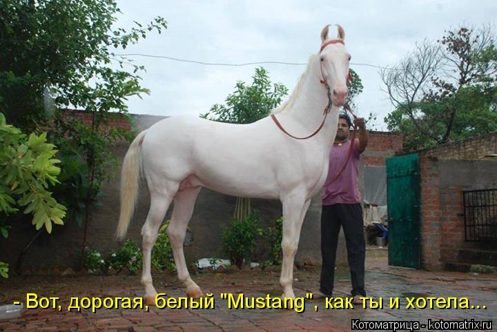 """Котоматрица: - Вот, дорогая, белый """"Mustang"""", как ты и хотела..."""