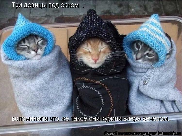 Котоматрица: Три девицы под окном... вспоминали что же такое они курили вчера вечером...