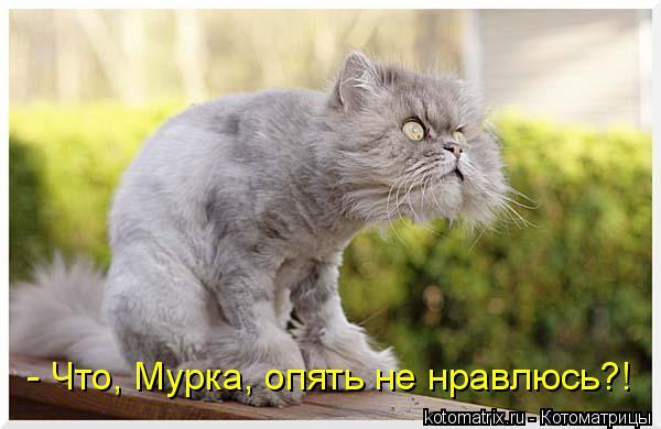 Котоматрица: - Что, Мурка, опять не нравлюсь?!