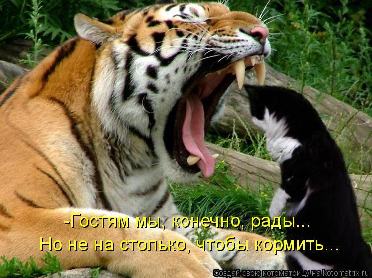 Котоматрица: -Гостям мы, конечно, рады... Но не на столько, чтобы кормить...