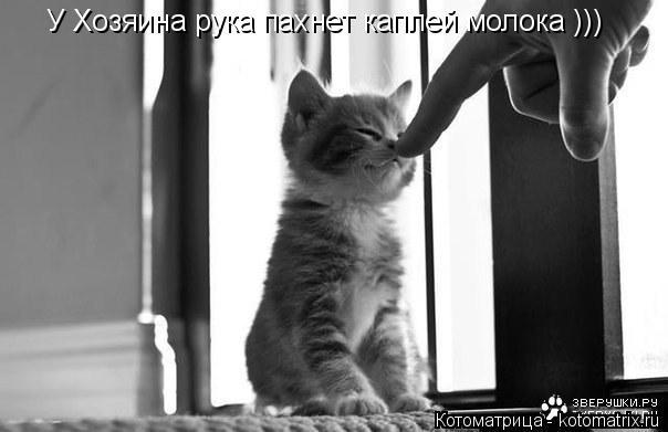 Котоматрица: У Хозяина рука пахнет каплей молока )))