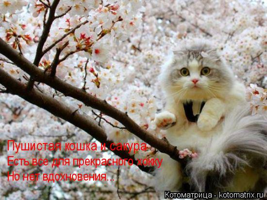 Котоматрица: Пушистая кошка и сакура Есть все для прекрасного хокку Но нет вдохновения...