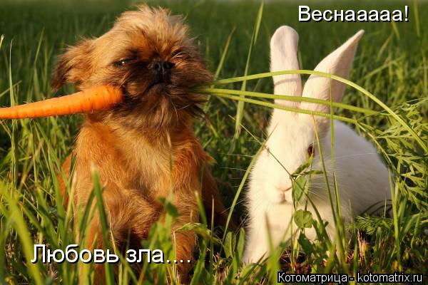 Котоматрица: Веснааааа! Любовь зла....