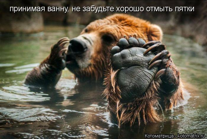 Котоматрица: принимая ванну, не забудьте хорошо отмыть пятки