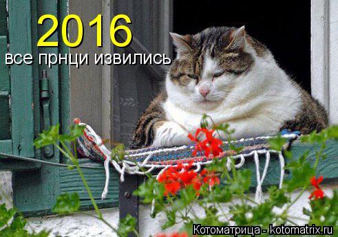 Котоматрица: 2016 все прнци извились