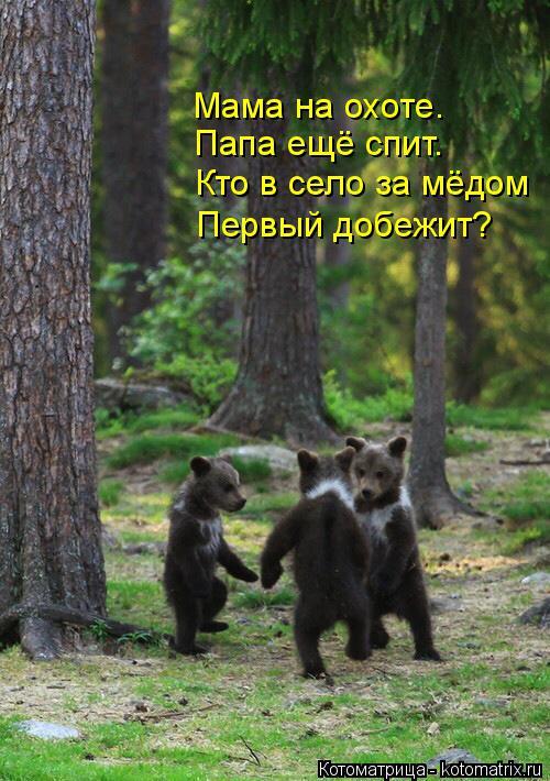 Котоматрица: Мама на охоте. Папа ещё спит. Кто в село за мёдом Первый добежит?
