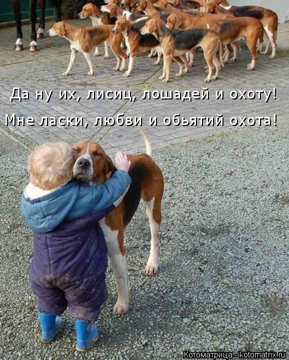 Котоматрица: Да ну их, лисиц, лошадей и охоту! Мне ласки, любви и обьятий охота!