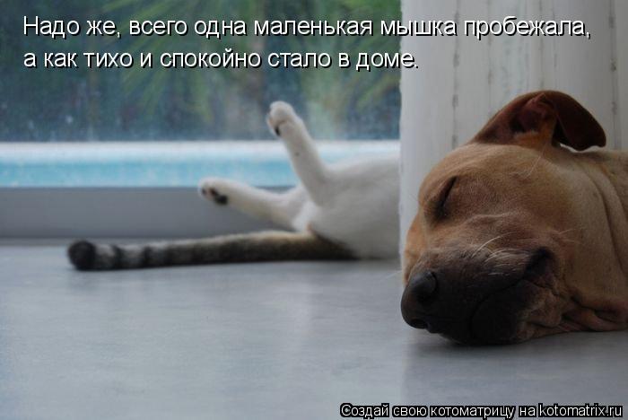 Котоматрица: Надо же, всего одна маленькая мышка пробежала, а как тихо и спокойно стало в доме.