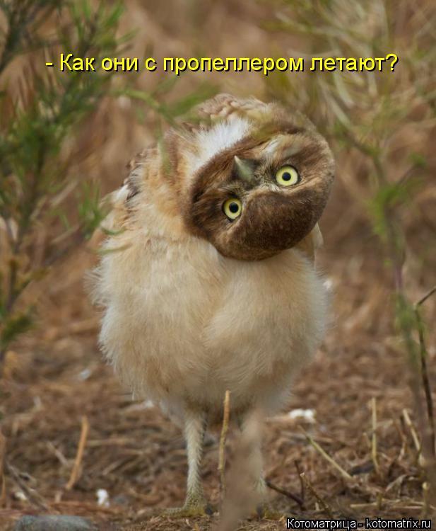 Котоматрица: - Как они с пропеллером летают?