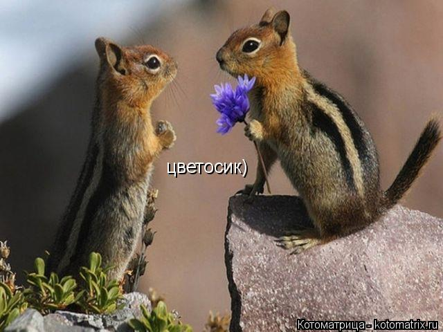 Котоматрица: цветосик)