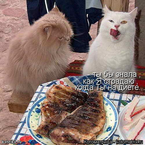 Котоматрица: ты бы знала , как Я страдаю , когда Ты на диете...