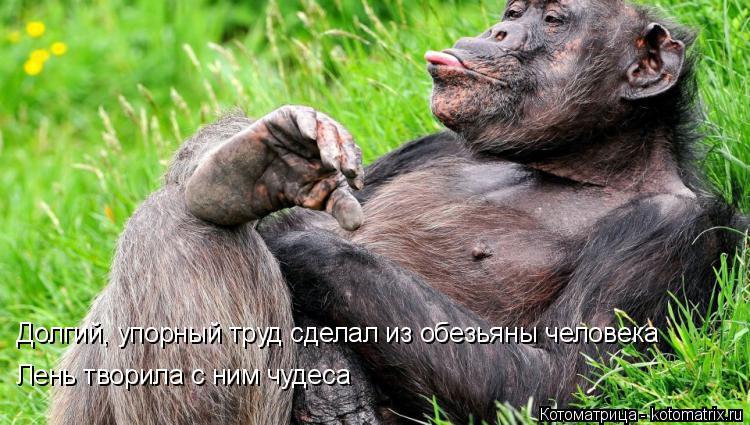 Котоматрица: Долгий, упорный труд сделал из обезьяны человека Лень творила с ним чудеса