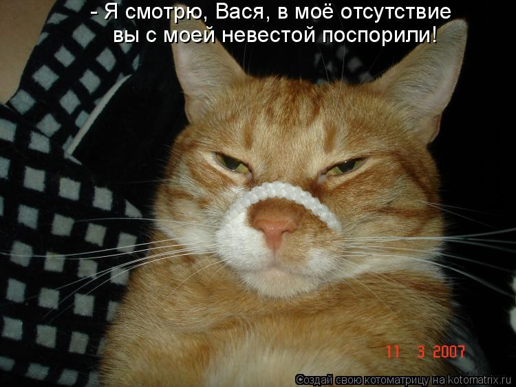 Котоматрица: - Я смотрю, Вася, в моё отсутствие вы с моей невестой поспорили!