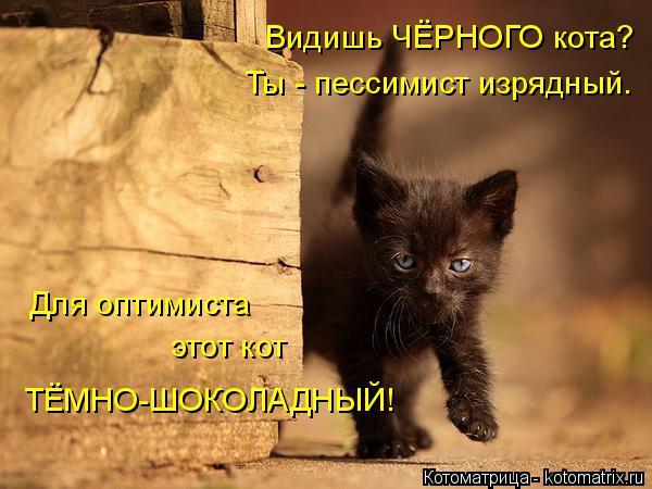 Котоматрица: Для оптимиста этот кот ТЁМНО-ШОКОЛАДНЫЙ! Видишь ЧЁРНОГО кота? Ты - пессимист изрядный.