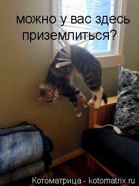 Котоматрица: можно у вас здесь  приземлиться?