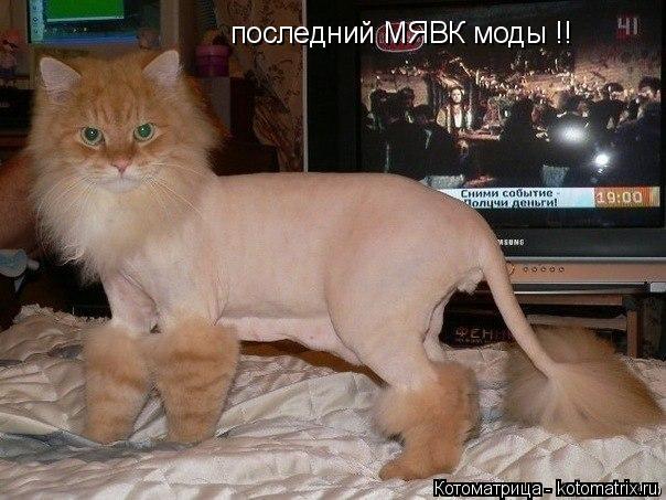 Котоматрица: последний МЯВК моды !!