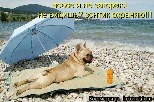 Котоматрица: не видишь? зонтик охраняю!!! вовсе я не загораю!