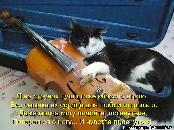 Котоматрица: Я на струнах души тоже классно играю. Без смычка их сердца для любви открываю. Даже молча могу подойти, потянуться, Потереться о ногу... И чув