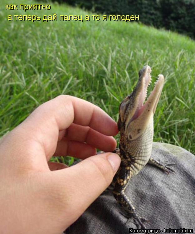 Котоматрица: как приятно     а теперь дай палец а то я голоден