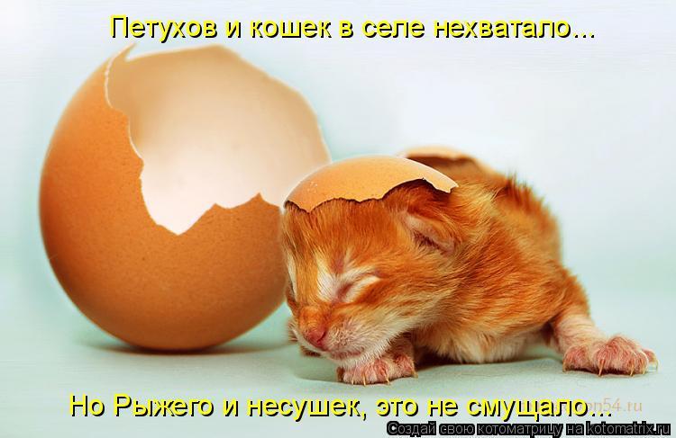 Котоматрица: Но Рыжего и несушек, это не смущало... Петухов и кошек в селе нехватало...