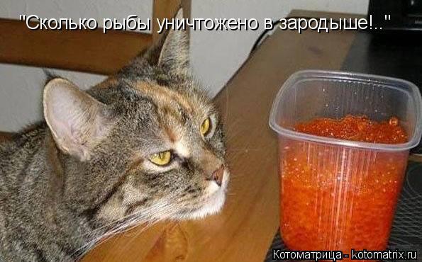 """Котоматрица: """"Сколько рыбы уничтожено в зародыше!.."""""""