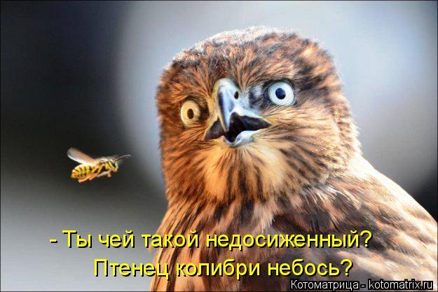 Котоматрица: - Ты чей такой недосиженный? Птенец колибри небось?