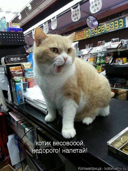 Котоматрица: котик весовооой, недорого! налетай!