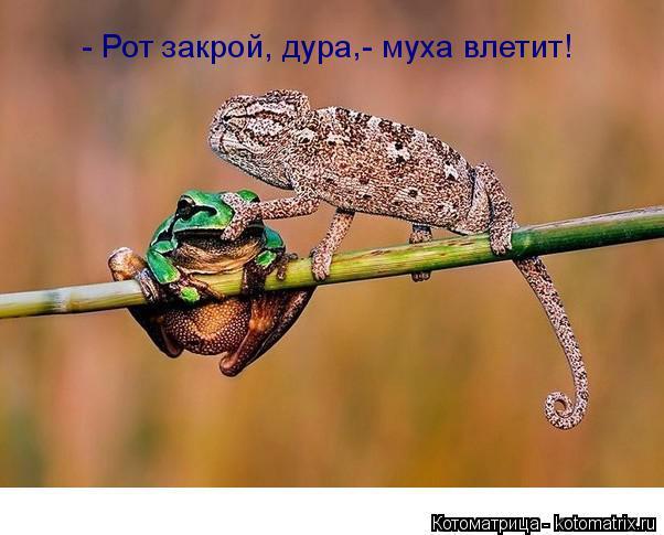 Котоматрица: - Рот закрой, дура - муха влетит! ,