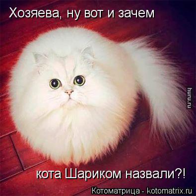 Котоматрица: Хозяева, ну вот и зачем кота Шариком назвали?!