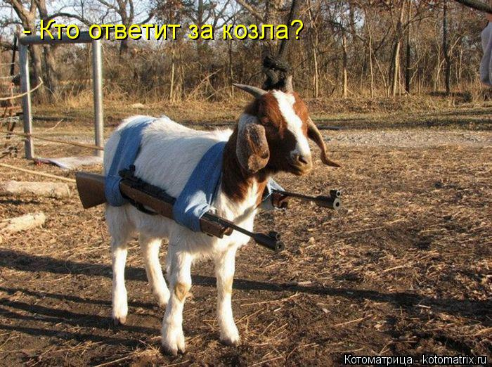 Котоматрица: - Кто ответит за козла?