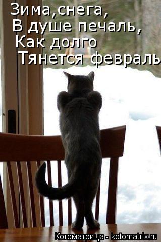 Котоматрица: Тянется февраль Как долго  В душе печаль, Зима,снега,