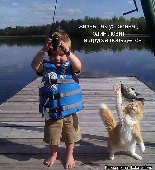 Котоматрица: жизнь так устроена , один ловит а другая пользуется...