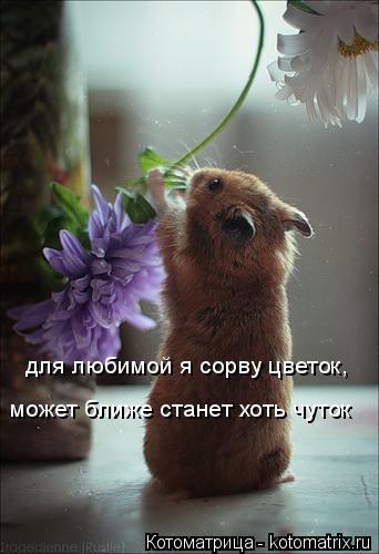 Котоматрица: для любимой я сорву цветок, может ближе станет хоть чуток