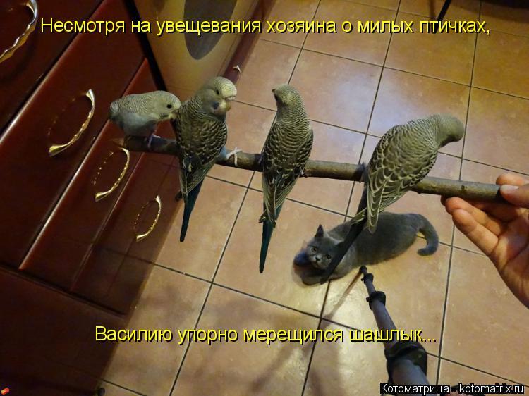 Котоматрица: Несмотря на увещевания хозяина о милых птичках,  Василию упорно мерещился шашлык...