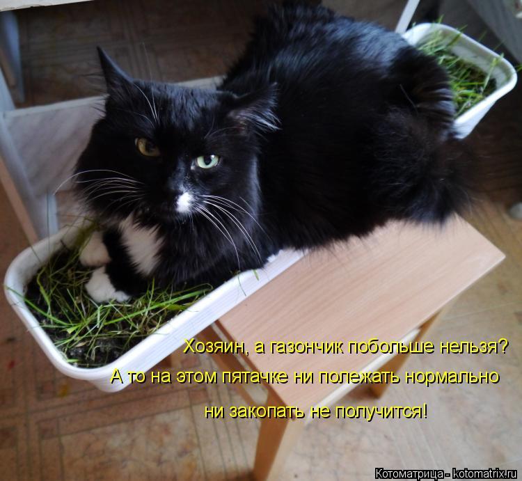 Котоматрица: Хозяин, а газончик побольше нельзя? А то на этом пятачке ни полежать нормально ни закопать не получится!