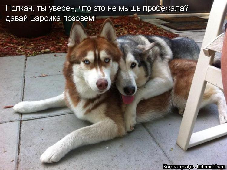 Котоматрица: Полкан, ты уверен, что это не мышь пробежала? давай Барсика позовем!