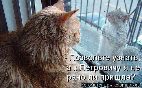 Котоматрица: - Позвольте узнать, а к Петровичу я не рано ли пришла?