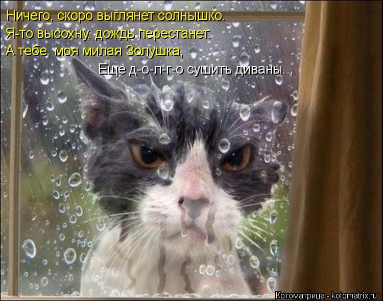 Котоматрица: Ничего, скоро выглянет солнышко. Я-то высохну, дождь перестанет. А тебе, моя милая Золушка, Еще д-о-л-г-о сушить диваны...