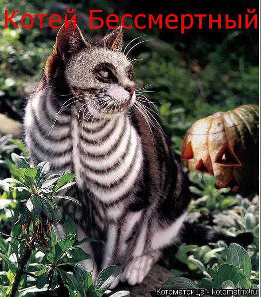 Котоматрица: Котей Бессмертный