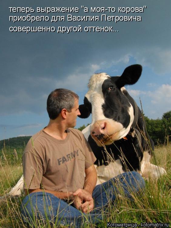 """Котоматрица: теперь выражение """"а моя-то корова"""" приобрело для Василия Петровича совершенно другой оттенок..."""