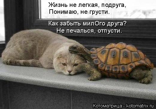 Котоматрица: Жизнь не легкая, подруга, Понимаю, не грусти. Как забыть милОго друга? Не печалься, отпусти.