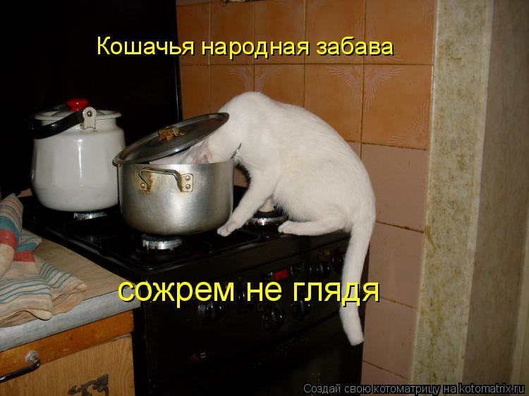 Котоматрица: Кошачья народная забава сожрем не глядя