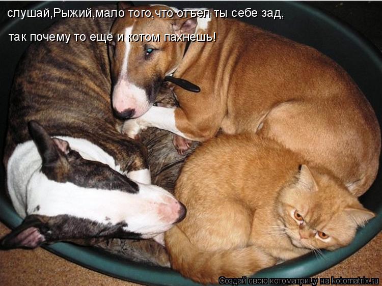 Котоматрица: слушай,Рыжий,мало того,что отъел ты себе зад, так почему то ещё и котом пахнешь!