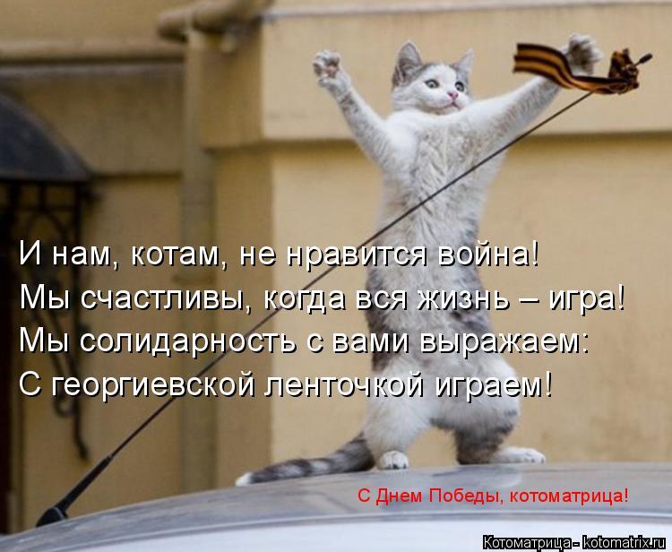 Котоматрица: И нам, котам, не нравится война! Мы счастливы, когда вся жизнь – игра! Мы солидарность с вами выражаем: С георгиевской ленточкой играем! С Дне
