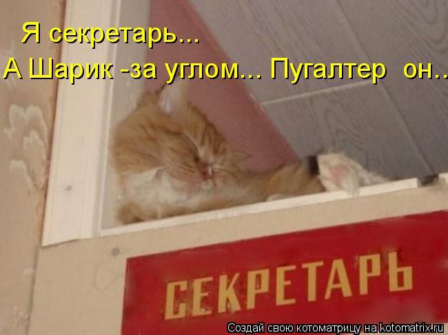 Котоматрица: Я секретарь... А Шарик -за углом... Пугалтер  он...