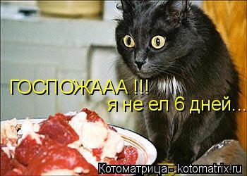 Котоматрица: ГОСПОЖААА !!! я не ел 6 дней...