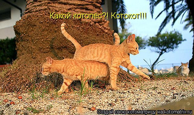 Котоматрица: Какой котопёс?! Котокот!!!